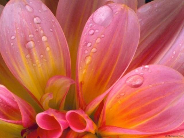 flowers_005.jpg