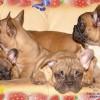 http://www.mybulldogs.ru/