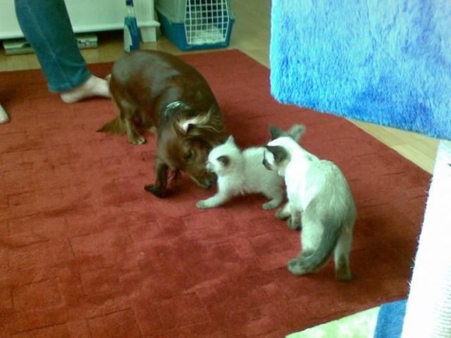лизка знакомит родственника со своей новой мамой