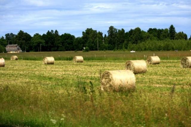 поля поля поля