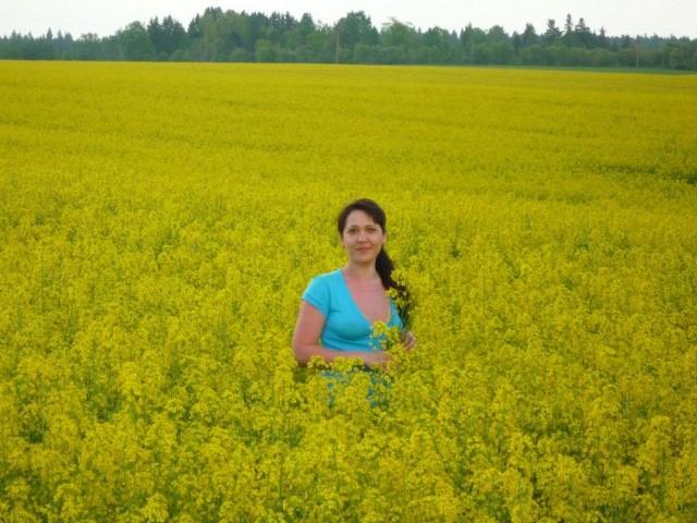 золотое поле