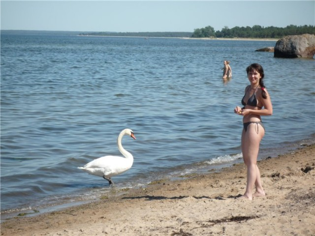 лебед.jpg