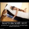 530698 martovskij Kot
