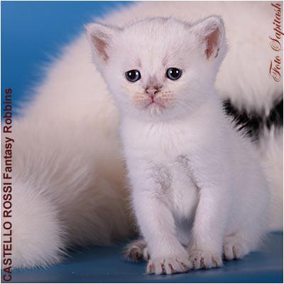 kittens fantez4