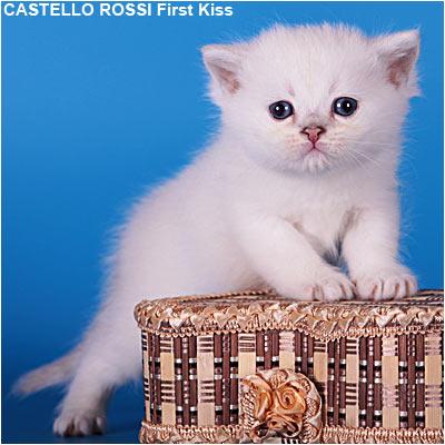 kitten fiest5