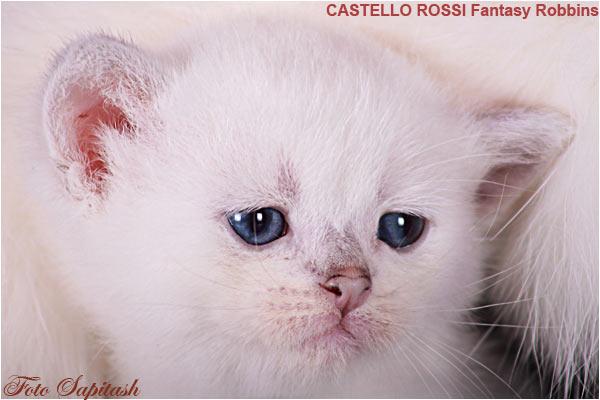kitten foxi2
