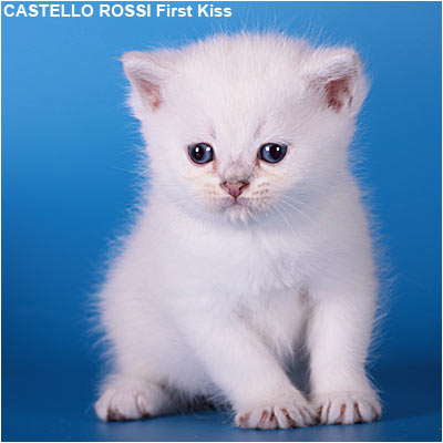 kitten fiest7