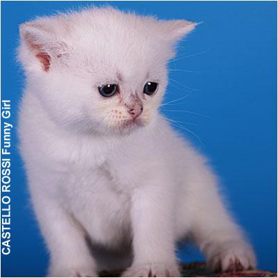 kittens foto funny3