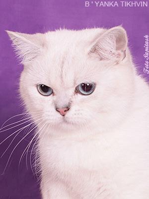 Cat katya8