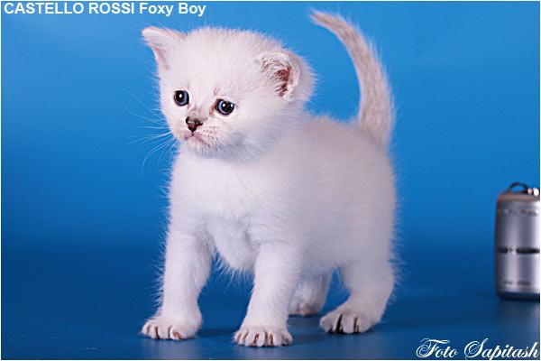 kitten foxi7